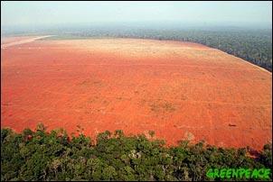 C'era una volta l'Amazzonia..