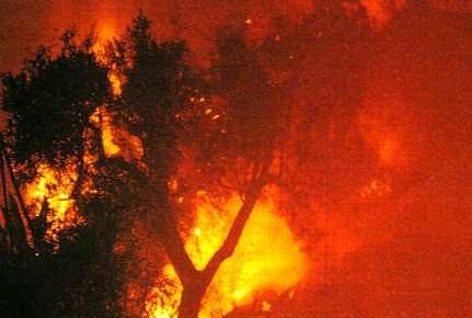 L'Italia brucia..i piromani ridono