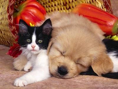 Cani e gatti in appartamento, ecco le nuove regoli per i condomini