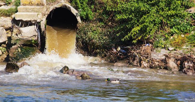 Senato, approvati quattro nuovi reati ambientali